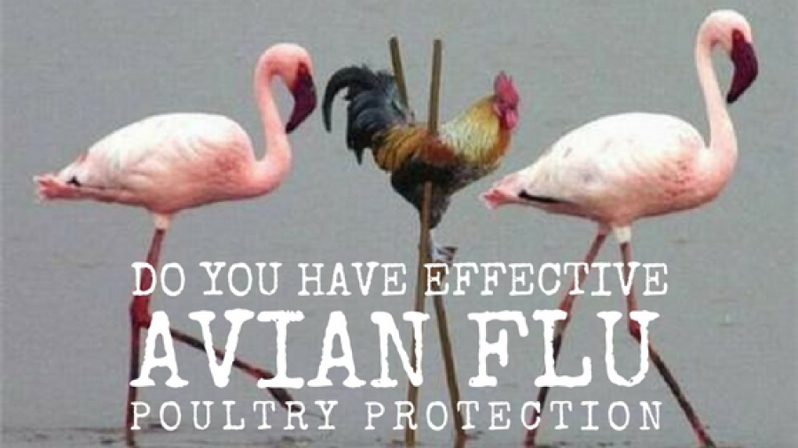 Avian influenza / bird flu :: How to keep the area around poultry houses free of wild birds and their droppings