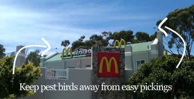 keep pest birds away from easy pickings