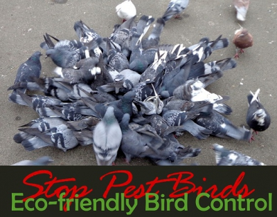 eco-friendly bird control