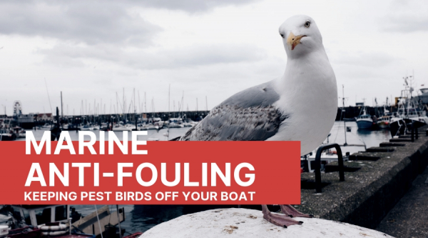Bird control for boats – how to keep Pest Birds off your boat.
